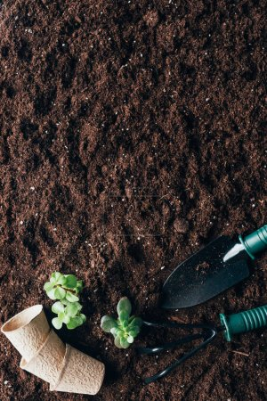 top view of gardening tools, green plants and flower pots on soil