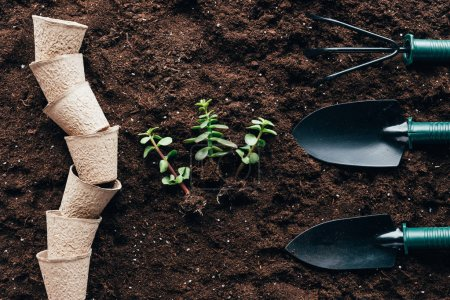 Photo for Top view of green plants with roots, empty pots and gardening tools on soil - Royalty Free Image