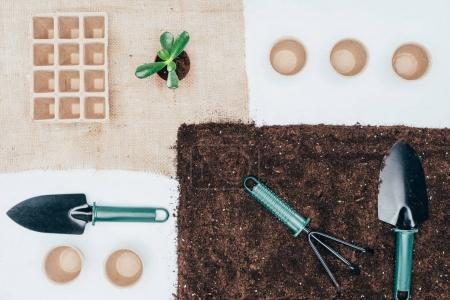 top view of green potted plant, empty pots, soil and gardening tools on grey