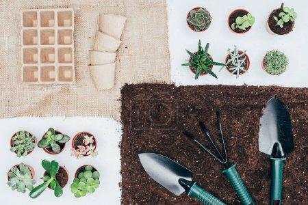 Photo pour Vue de dessus de verdure en pot, plantes, pots vides, le sol et outils de jardinage sur fond gris - image libre de droit