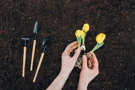 partial view of person planting beautiful green flowers in soil and small gardening tools on ground