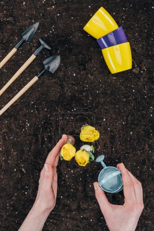 Photo for Cropped shot of person with small watering can planting beautiful yellow flowers growing in soil - Royalty Free Image