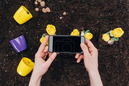 Photo pour Vue partielle de la personne à l'aide de smartphone avec écran blanc et de belles fleurs jaunes avec des pots sur le sol - image libre de droit