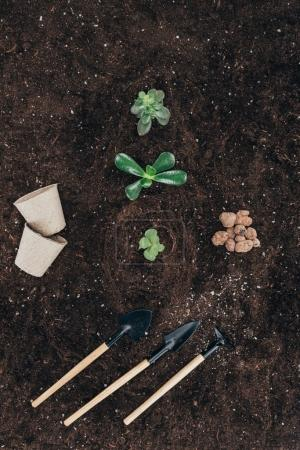 top view of beautiful green plants in soil, flower pots and gardening tools
