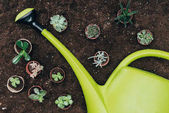 top view of beautiful green potted plants and big plastic watering can on soil