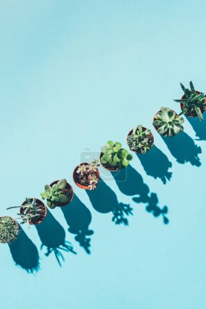 top view of arranged beautiful green houseplants in pots with shadows on blue