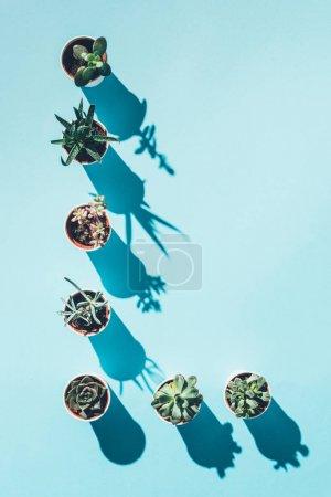 Photo pour Vue du dessus de la lettre L faite de plantes vertes en pot sur fond bleu - image libre de droit