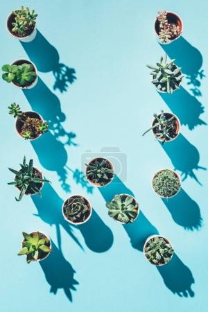 top view of letter W made from green potted plants on blue