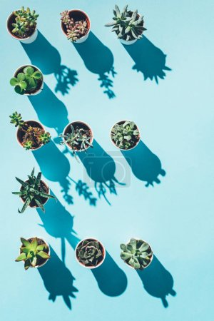 top view of letter E made from green potted plants on blue