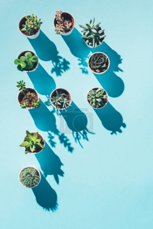 top view of letter P made from green potted plants on blue