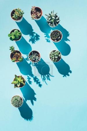 vista superior de la letra P hecha de plantas en maceta verde sobre azul