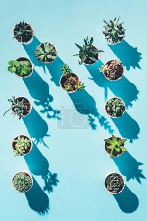 Ansicht des Buchstabens m aus grünen Topfpflanzen auf blauem Grund