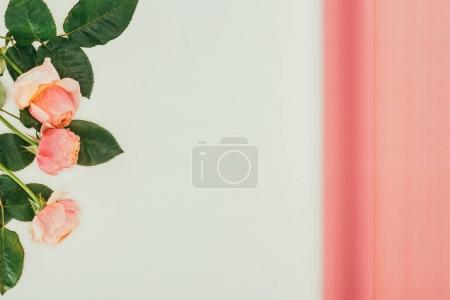 beautiful pink roses with green leaves on grey background