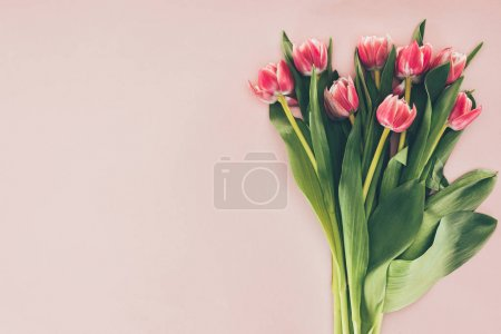 bouquet of beautiful pink tulips with green leaves on pink
