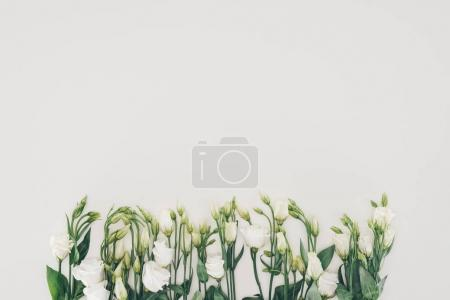 Photo for Beautiful white blooming flowers with green leaves on grey background - Royalty Free Image