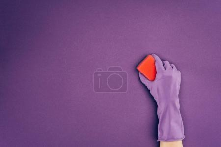 Cropped image of woman holding washing sponge in protective glove isolated on violet