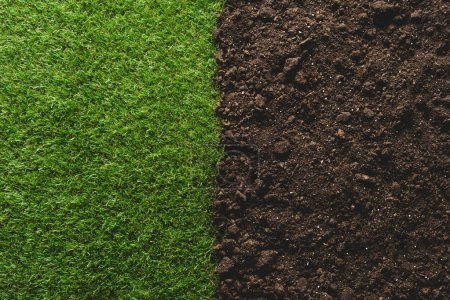 Photo for Top view of green lawn and soil background - Royalty Free Image
