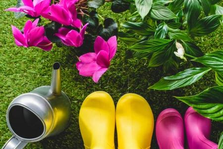 top view of colorful rubber boots, watering can and flowers