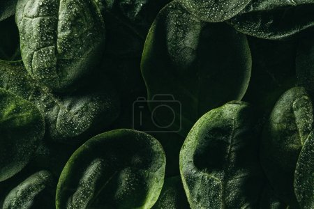 Photo for Dark floral background with fresh green leaves and water drops - Royalty Free Image