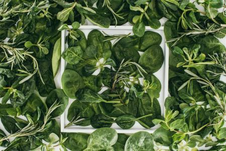 top view of beautiful fresh green leaves and plants in white frame on white