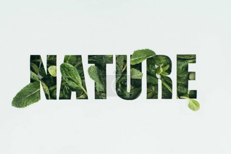word nature made from fresh green leaves isolated on grey