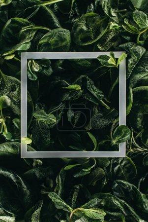 Photo pour Cadre carré blanc et vert foncé feuilles, fond floral - image libre de droit