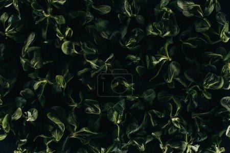 Photo pour Belles feuilles vertes fraîches, fond floral foncé - image libre de droit