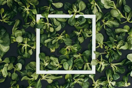 Photo for Top view of white square frame and beautiful fresh green leaves - Royalty Free Image