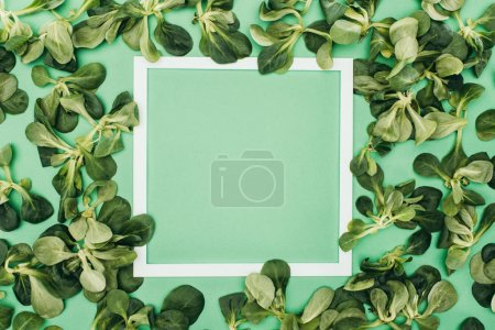 blank white frame and fresh green leaves on green