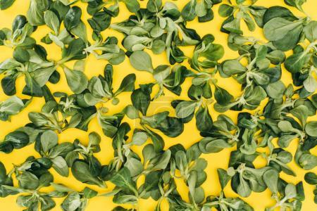 top view of pattern made from beautiful green corn salad leaves on yellow