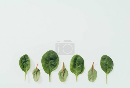 Photo for Beautiful fresh green leaves in a row isolated on grey background - Royalty Free Image