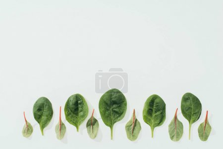 close-up view of beautiful fresh green leaves in a row isolated on grey background