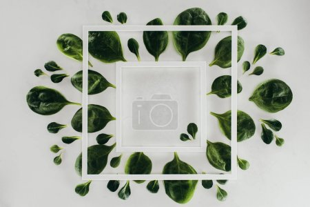 Photo for Top view of white square frames and beautiful fresh green leaves on grey - Royalty Free Image