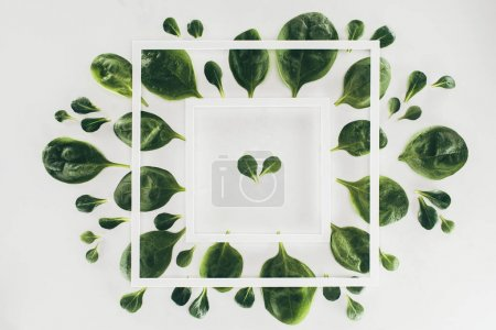 top view of white square frames and fresh green spinach leaves on grey