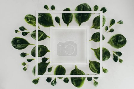 top view of fresh green leaves and white square frames on grey