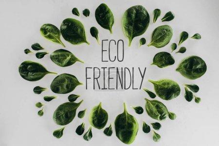 Photo pour Vue du dessus des feuilles vertes et inscription écologique sur gris - image libre de droit