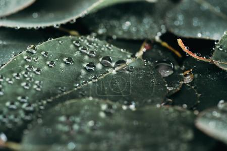 close-up view of beautiful green leaves with dew drops on black