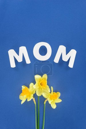 top view of daffodils and word mom isolated on blue, mothers day concept