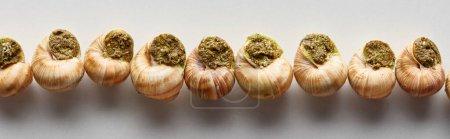 Photo pour Vue de dessus de délicieux escargots cuits en rangée sur fond blanc, vue panoramique - image libre de droit