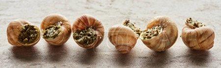 deliciosas escargots gourmet en fila sobre fondo de piedra, plano panorámico