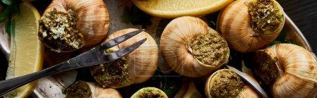 Photo pour Vue de dessus de délicieux escargots cuits avec des tranches de citron et des couverts sur l'assiette, vue panoramique - image libre de droit