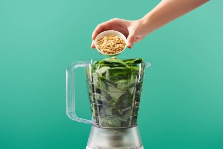 Photo for Cropped view of woman adding pine nuts to basil leaves in food processor isolated on green - Royalty Free Image