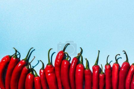 Draufsicht auf scharfe rote Chilischoten auf blauem Hintergrund