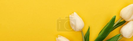 Photo for Top view of spring tulips on colorful yellow background, panoramic shot - Royalty Free Image