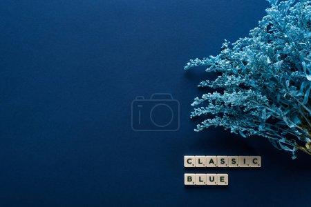 Photo pour Vue de dessus du lettrage bleu classique sur cubes près de la plante peinte sur fond bleu - image libre de droit
