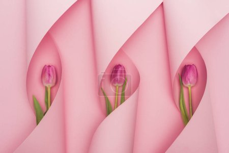 Foto de Visión superior de los tulipanes púrpuros en las manchas de papel sobre fondo rosado. - Imagen libre de derechos