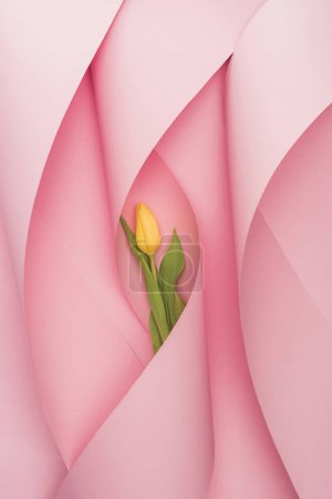 Photo for Top view of yellow tulip in paper swirls on pink background - Royalty Free Image