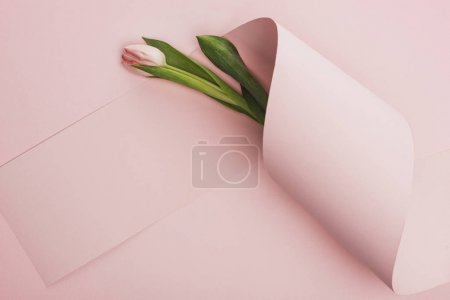 Photo for Top view of spring tulip wrapped in paper swirl on pink background - Royalty Free Image