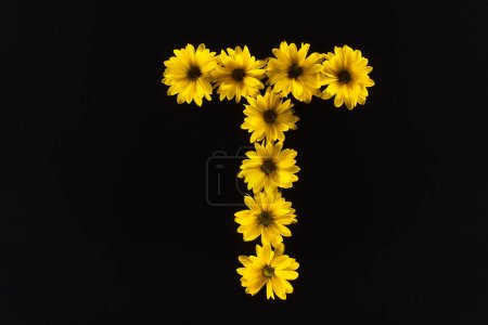 Photo for Top view of yellow daisies arranged in letter T isolated on black - Royalty Free Image