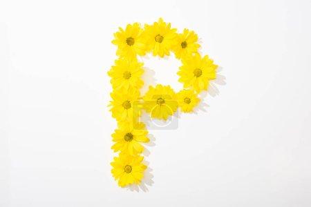 Foto de Vista superior de las margaritas amarillas dispuestas en la letra P sobre fondo blanco - Imagen libre de derechos